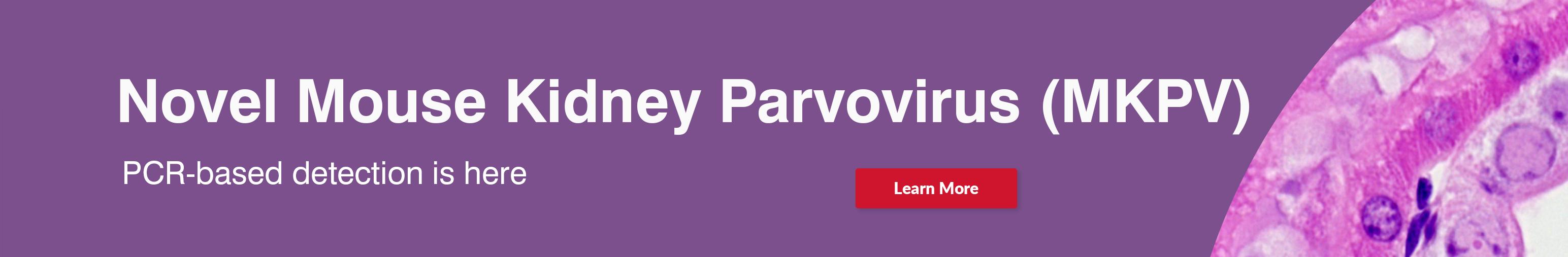 MK Parvo Banner PCR