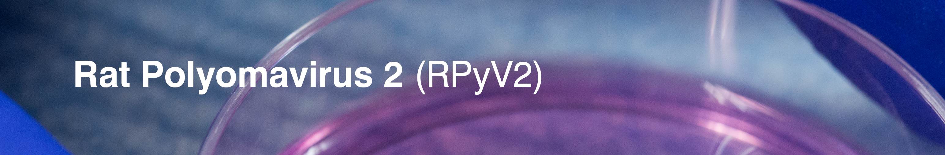 New-Landing-Banner-RPOLY-WHITE-RE-1.png